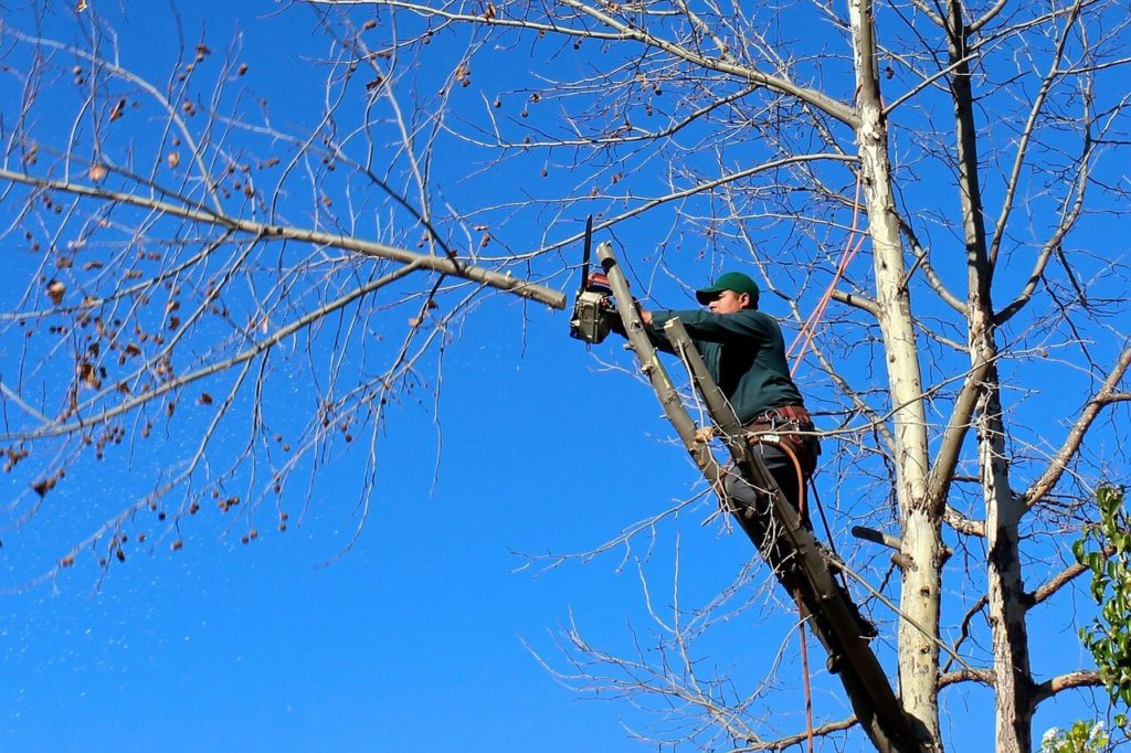 Contact Us-Thonotosassa FL Tree Trimming and Stump Grinding Services-We Offer Tree Trimming Services, Tree Removal, Tree Pruning, Tree Cutting, Residential and Commercial Tree Trimming Services, Storm Damage, Emergency Tree Removal, Land Clearing, Tree Companies, Tree Care Service, Stump Grinding, and we're the Best Tree Trimming Company Near You Guaranteed!