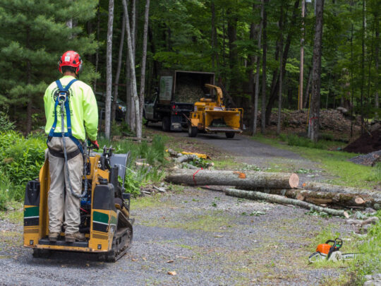 Emergency Tree Removal-Thonotosassa FL Tree Trimming and Stump Grinding Services-We Offer Tree Trimming Services, Tree Removal, Tree Pruning, Tree Cutting, Residential and Commercial Tree Trimming Services, Storm Damage, Emergency Tree Removal, Land Clearing, Tree Companies, Tree Care Service, Stump Grinding, and we're the Best Tree Trimming Company Near You Guaranteed!