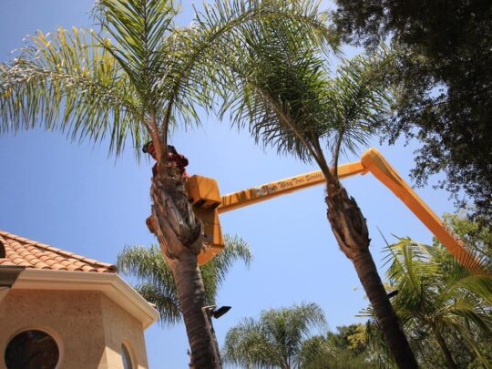 Palm Tree Trimming-Thonotosassa FL Tree Trimming and Stump Grinding Services-We Offer Tree Trimming Services, Tree Removal, Tree Pruning, Tree Cutting, Residential and Commercial Tree Trimming Services, Storm Damage, Emergency Tree Removal, Land Clearing, Tree Companies, Tree Care Service, Stump Grinding, and we're the Best Tree Trimming Company Near You Guaranteed!