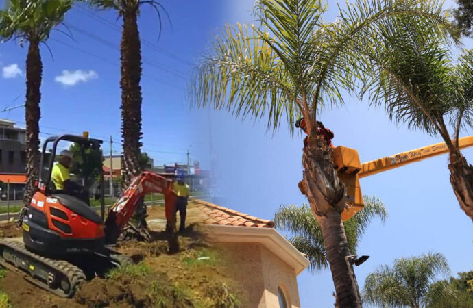 Palm tree trimming & palm tree removal-Thonotosassa FL Tree Trimming and Stump Grinding Services-We Offer Tree Trimming Services, Tree Removal, Tree Pruning, Tree Cutting, Residential and Commercial Tree Trimming Services, Storm Damage, Emergency Tree Removal, Land Clearing, Tree Companies, Tree Care Service, Stump Grinding, and we're the Best Tree Trimming Company Near You Guaranteed!