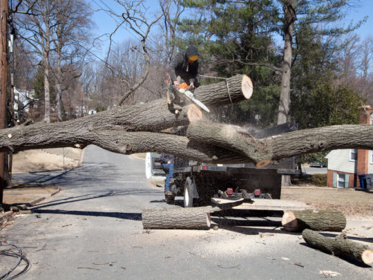 Residential Tree Services-Thonotosassa FL Tree Trimming and Stump Grinding Services-We Offer Tree Trimming Services, Tree Removal, Tree Pruning, Tree Cutting, Residential and Commercial Tree Trimming Services, Storm Damage, Emergency Tree Removal, Land Clearing, Tree Companies, Tree Care Service, Stump Grinding, and we're the Best Tree Trimming Company Near You Guaranteed!