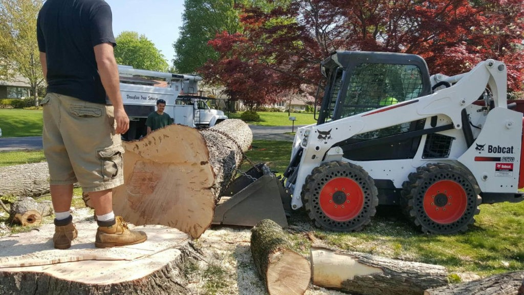 Services-Thonotosassa FL Tree Trimming and Stump Grinding Services-We Offer Tree Trimming Services, Tree Removal, Tree Pruning, Tree Cutting, Residential and Commercial Tree Trimming Services, Storm Damage, Emergency Tree Removal, Land Clearing, Tree Companies, Tree Care Service, Stump Grinding, and we're the Best Tree Trimming Company Near You Guaranteed!