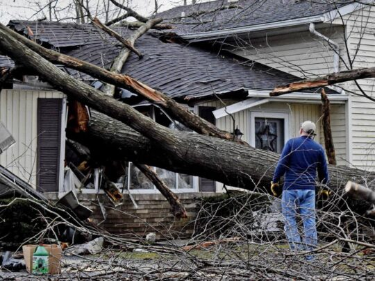 Storm Damage-Thonotosassa FL Tree Trimming and Stump Grinding Services-We Offer Tree Trimming Services, Tree Removal, Tree Pruning, Tree Cutting, Residential and Commercial Tree Trimming Services, Storm Damage, Emergency Tree Removal, Land Clearing, Tree Companies, Tree Care Service, Stump Grinding, and we're the Best Tree Trimming Company Near You Guaranteed!