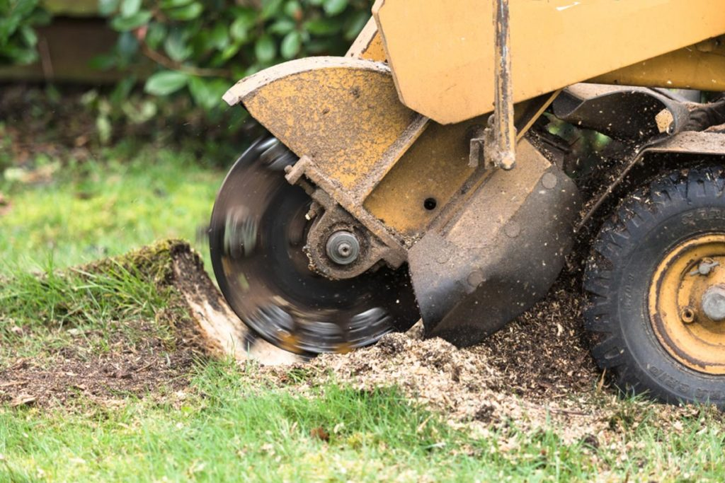 Stump Grinding-Thonotosassa FL Tree Trimming and Stump Grinding Services-We Offer Tree Trimming Services, Tree Removal, Tree Pruning, Tree Cutting, Residential and Commercial Tree Trimming Services, Storm Damage, Emergency Tree Removal, Land Clearing, Tree Companies, Tree Care Service, Stump Grinding, and we're the Best Tree Trimming Company Near You Guaranteed!