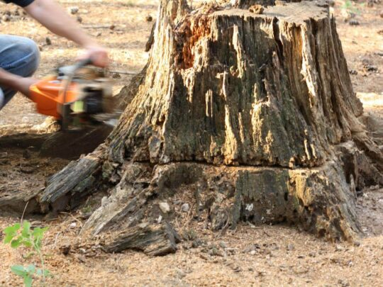 Stump Removal-Thonotosassa FL Tree Trimming and Stump Grinding Services-We Offer Tree Trimming Services, Tree Removal, Tree Pruning, Tree Cutting, Residential and Commercial Tree Trimming Services, Storm Damage, Emergency Tree Removal, Land Clearing, Tree Companies, Tree Care Service, Stump Grinding, and we're the Best Tree Trimming Company Near You Guaranteed!