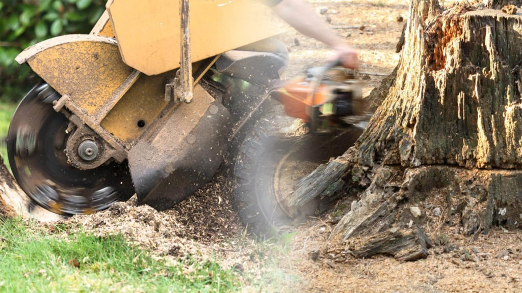 Stump grinding & removal-Thonotosassa FL Tree Trimming and Stump Grinding Services-We Offer Tree Trimming Services, Tree Removal, Tree Pruning, Tree Cutting, Residential and Commercial Tree Trimming Services, Storm Damage, Emergency Tree Removal, Land Clearing, Tree Companies, Tree Care Service, Stump Grinding, and we're the Best Tree Trimming Company Near You Guaranteed!