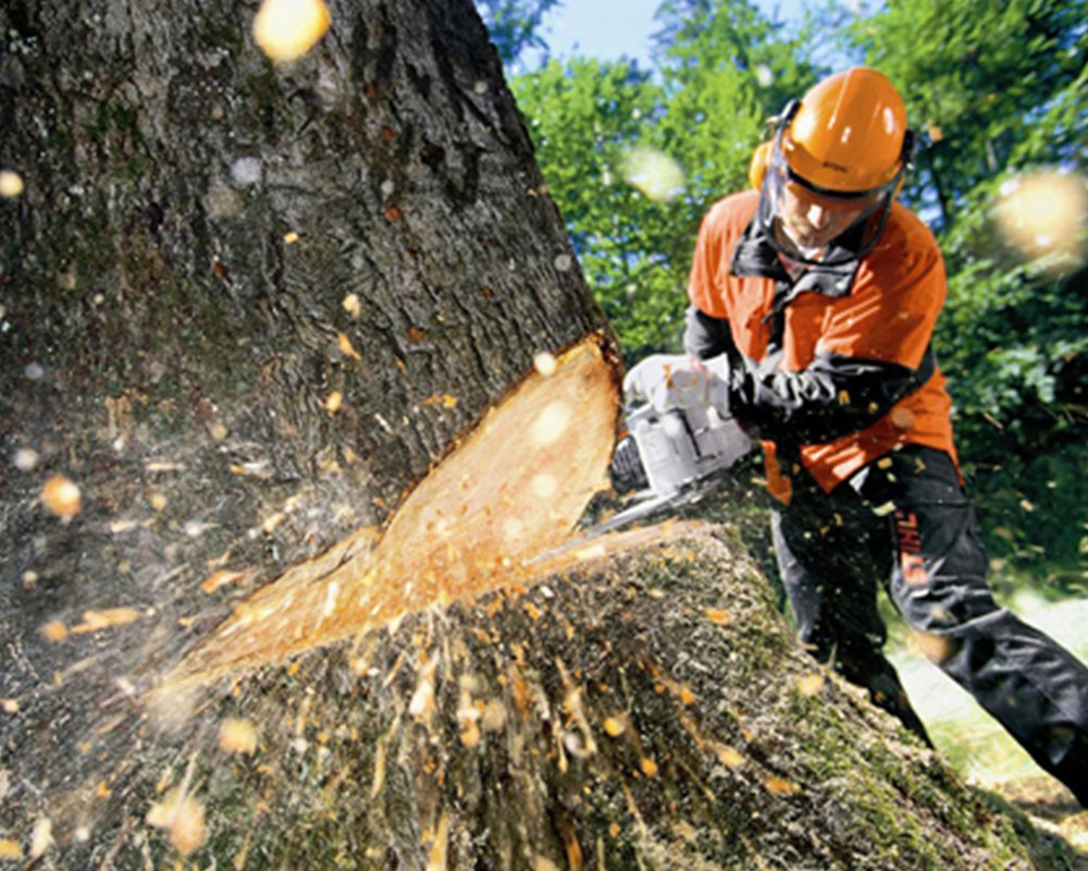 Tree Cutting-Thonotosassa FL Tree Trimming and Stump Grinding Services-We Offer Tree Trimming Services, Tree Removal, Tree Pruning, Tree Cutting, Residential and Commercial Tree Trimming Services, Storm Damage, Emergency Tree Removal, Land Clearing, Tree Companies, Tree Care Service, Stump Grinding, and we're the Best Tree Trimming Company Near You Guaranteed!