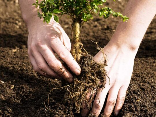 Tree Planting-Thonotosassa FL Tree Trimming and Stump Grinding Services-We Offer Tree Trimming Services, Tree Removal, Tree Pruning, Tree Cutting, Residential and Commercial Tree Trimming Services, Storm Damage, Emergency Tree Removal, Land Clearing, Tree Companies, Tree Care Service, Stump Grinding, and we're the Best Tree Trimming Company Near You Guaranteed!
