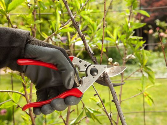 Tree Pruning-Thonotosassa FL Tree Trimming and Stump Grinding Services-We Offer Tree Trimming Services, Tree Removal, Tree Pruning, Tree Cutting, Residential and Commercial Tree Trimming Services, Storm Damage, Emergency Tree Removal, Land Clearing, Tree Companies, Tree Care Service, Stump Grinding, and we're the Best Tree Trimming Company Near You Guaranteed!