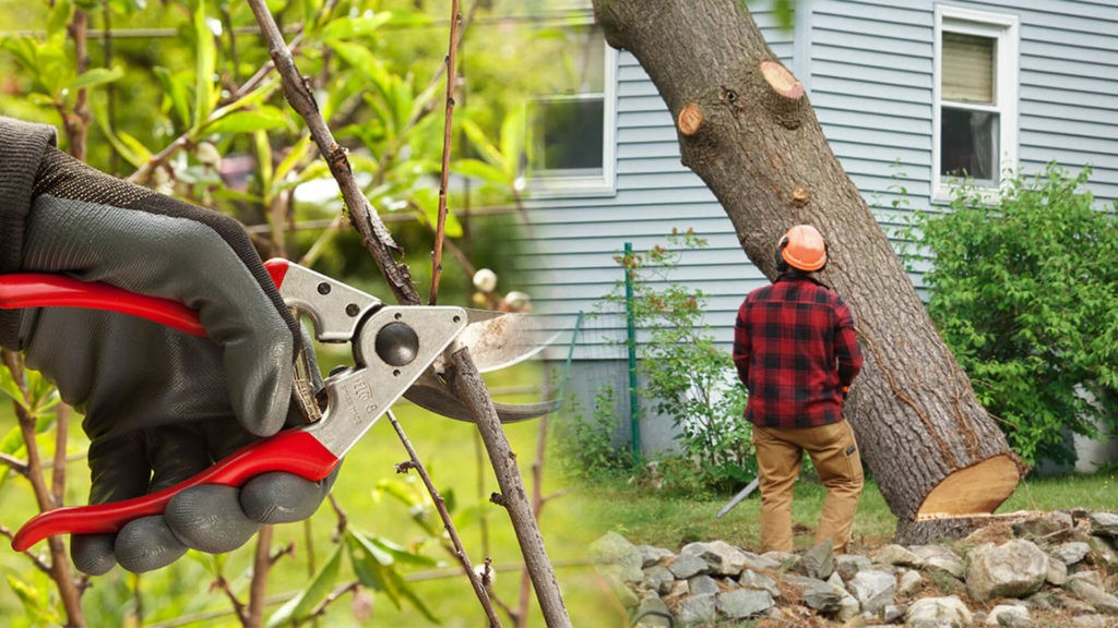 Tree pruning & tree removal-Thonotosassa FL Tree Trimming and Stump Grinding Services-We Offer Tree Trimming Services, Tree Removal, Tree Pruning, Tree Cutting, Residential and Commercial Tree Trimming Services, Storm Damage, Emergency Tree Removal, Land Clearing, Tree Companies, Tree Care Service, Stump Grinding, and we're the Best Tree Trimming Company Near You Guaranteed!